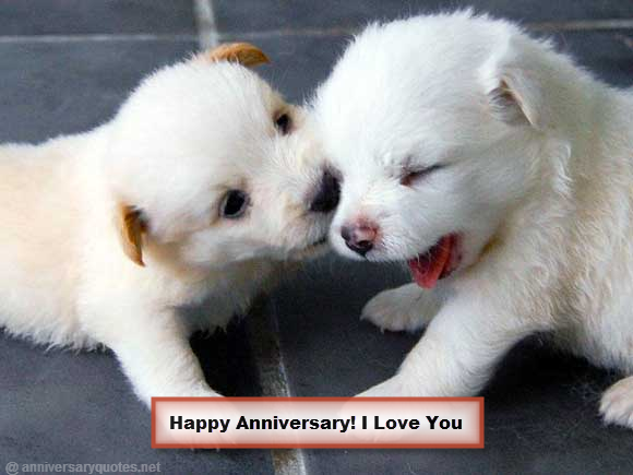 Happy Anniversary I Love You Ppuppies