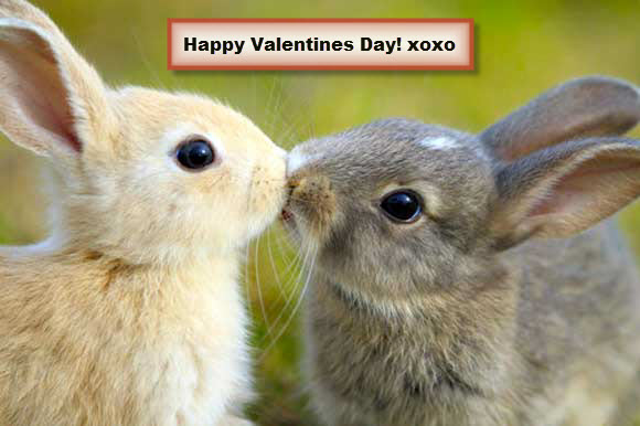 Valentine Rabbit Quotes : Valentines Day Pictures Cards