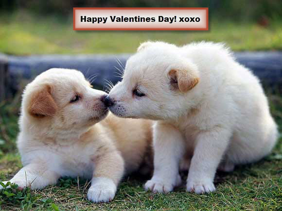 Happy Valentines Puppies Xoxo