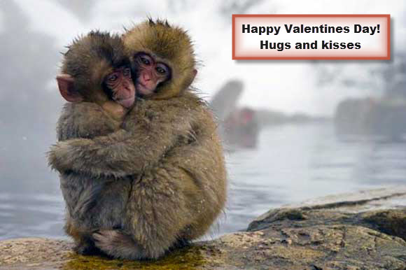 Sweet Hug for Valentines Day