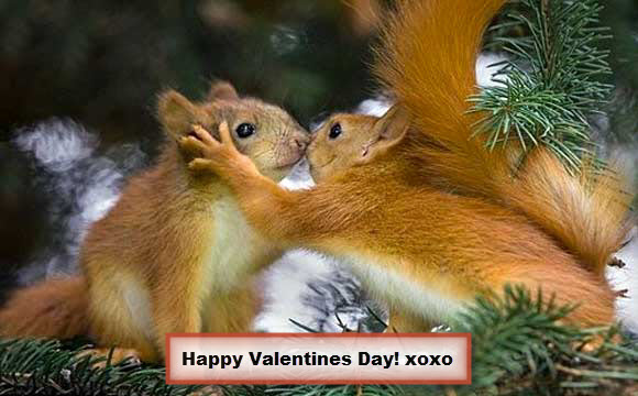 Kissing Squirrels Valentines