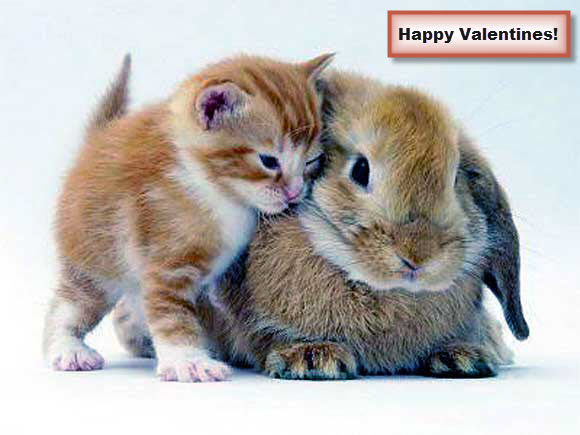 Kitten And Rabbit Valentines Day Hug