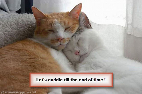 Lets Cuddle Together Cats Valentines