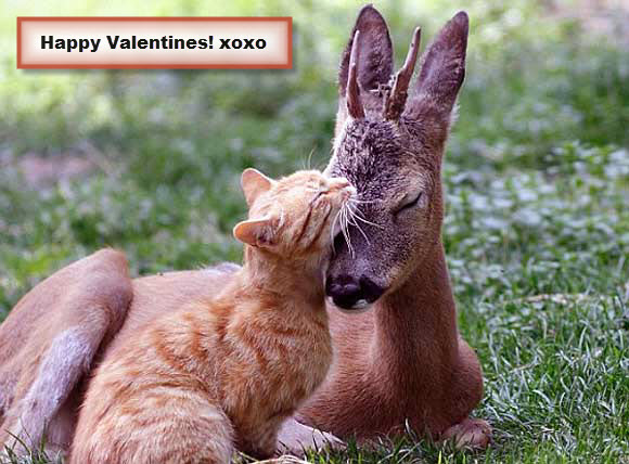 Animals Together for Valentines