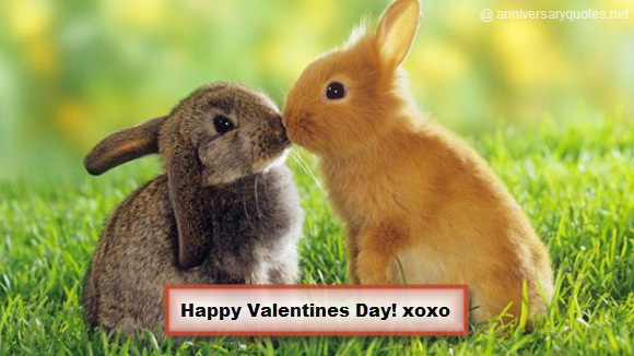 Valentines Day Picture Rabbits Kiss