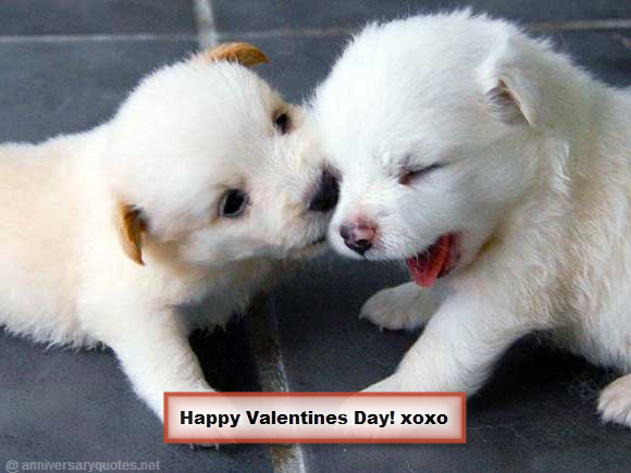 Sweet White Puppies Valentines Love