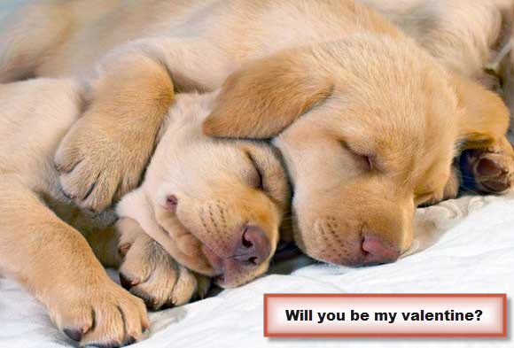 Will You Be My Valentine Puppies
