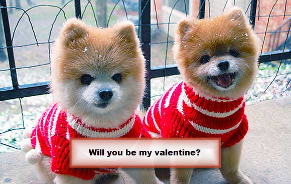 Will You Be My Valentine Sweet Puppies